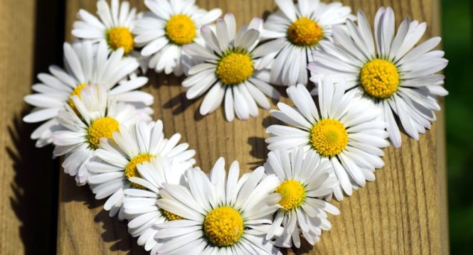 daisy heart for mother's day