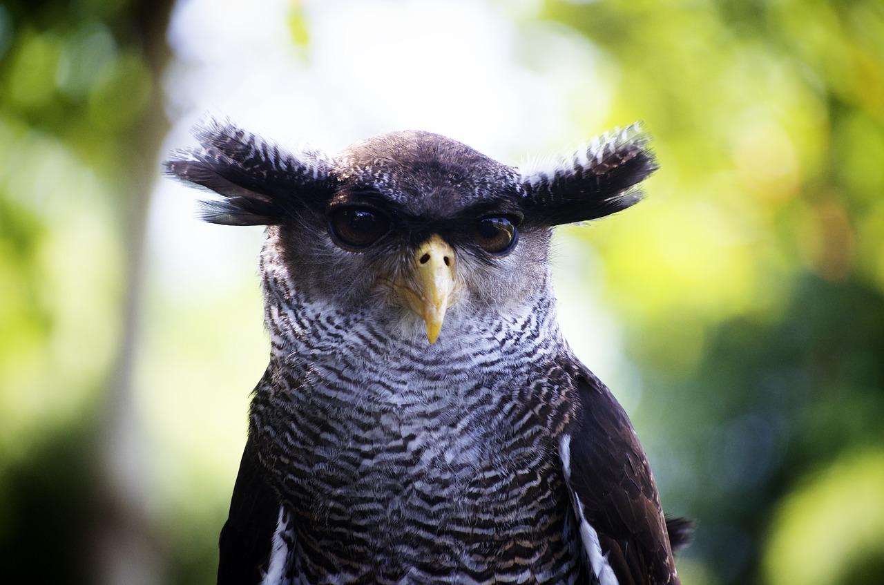 superstition owl